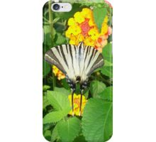 Scarce Swallowtail Feeding on Lantana iPhone Case/Skin