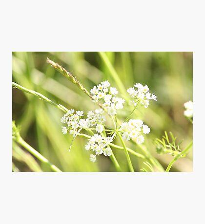 White Wild Photographic Print