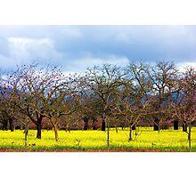 Tree Grove Photographic Print