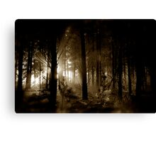 Forest mornings Canvas Print