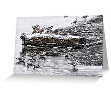Cold Seagulls (artistic) Greeting Card