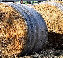 Large Hay Bales by Sally Murray