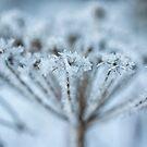 frozen in time by JorunnSjofn Gudlaugsdottir