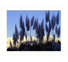 Vegetal feathers Art Print