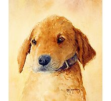 The Puppy Photographic Print