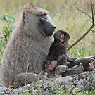 Baboon Bonding, Serengeti National Park, Tanzania by Adrian Paul