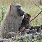 Baboon Bonding, Serengeti National Park, Tanzania by Adrian Paul