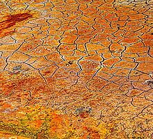 Cracked Mud along Salt Wash: Arches National Park by Roger Passman