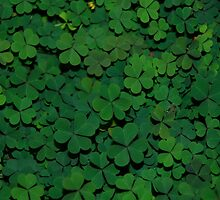 Clovers by Erin Allocca