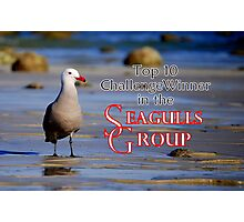 Seagulls Group Entry Photographic Print