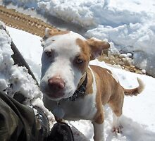 How could you want me gone? STOP BSL by Sanguine