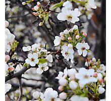 Spring Floral Photographic Print