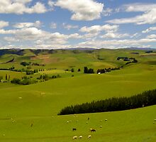 Rolling Hills of Canterbury by ijam357