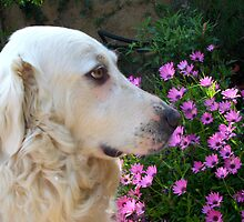 Our friends the animals by daffodil