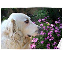 Sweet dog Poster