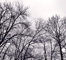 Rainy Day Trees Moody Sky April by M Sylvia Chaume