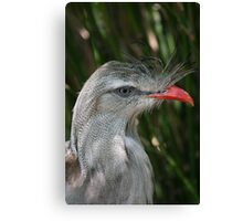 FANCY FEATHERS Canvas Print