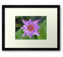 Fresh Water Lilly Flower Framed Print