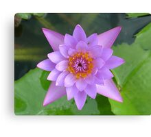 Fresh Water Lilly Flower Canvas Print