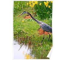 Blue Heron Scene Poster
