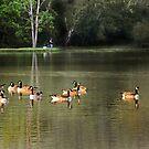 Fishing and Enjoying a Day at the Lake by CarolM