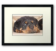 "Puppy ""Puplexed"" Framed Print"