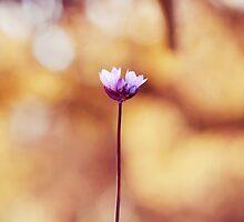 Optimism by Corin Jones