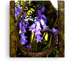 rustic bluebells .... Canvas Print