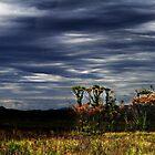 Tarkine, Tasmania by Angelika  Vogel