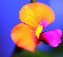 Exquisite by Coloursofnature