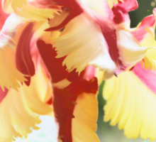 Water colour Parrot tulip Sticker
