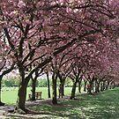 blossom walk by Jane Turnbull
