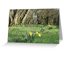 Daffodils steal the show at Farndale Greeting Card