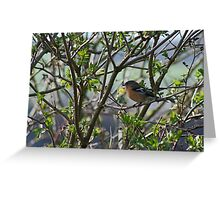 Chaffinch caught in the trees Greeting Card