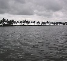 Waves in a lake with wind-swept palm trees at the far end by ashishagarwal74