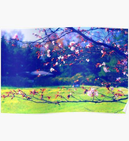 Sakura (1) Poster