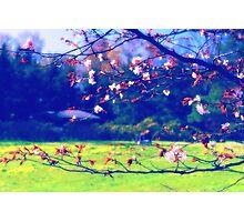 Sakura (1) Photographic Print
