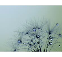 Tear drops from heaven Photographic Print