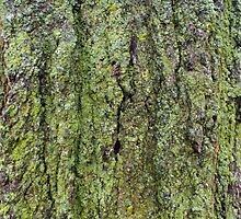 Green Lichen on Tree Bark by M Sylvia Chaume