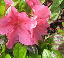 Pink Azalia by Kadava