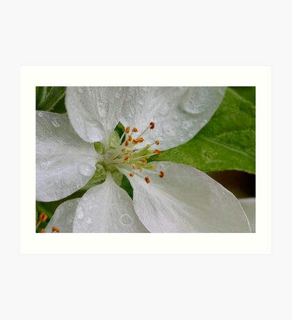 Heart Of A Tiny Apple Blossom Art Print