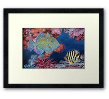 Trigger Fish Framed Print
