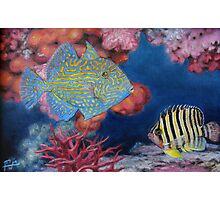Trigger Fish Photographic Print