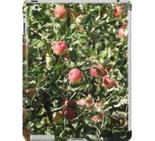 Ripe apples  on the tree iPad Case/Skin