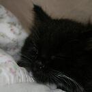 Lilly Sleeping by Fern Design