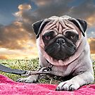 Pug by Matt Mawson