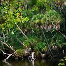 Swampland by Nadya Johnson