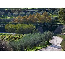 Olive Orchard Road Photographic Print