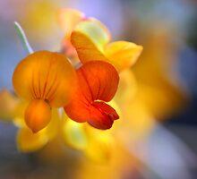 Whisper Soft by Kimberly Palmer
