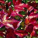 Autumn Leaves 2 by John Brotheridge
